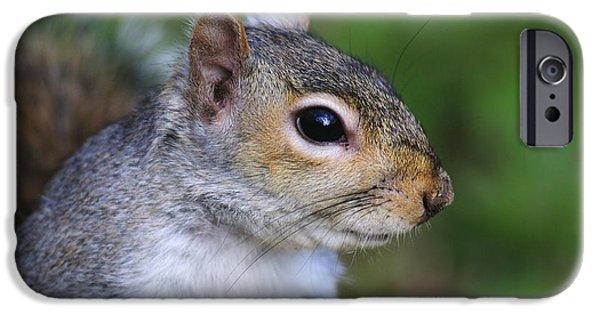 Sciurus Carolinensis iPhone Cases - Grey Squirrel iPhone Case by Colin Varndell