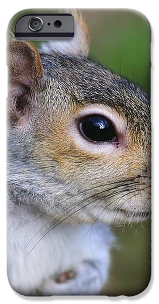 Grey Squirrel iPhone Case by Colin Varndell