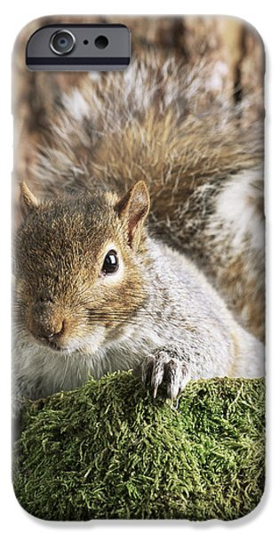 Bushy Tail iPhone Cases - Grey Squirrel iPhone Case by David Aubrey