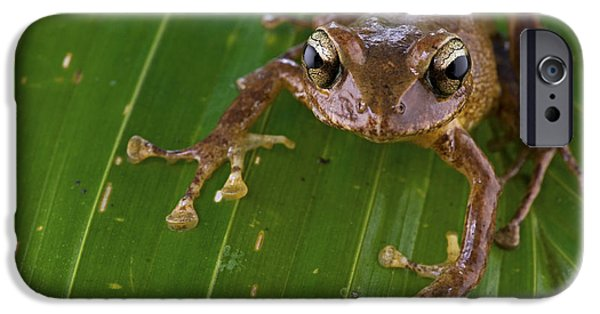 New Individuals iPhone Cases - Ground Frog Nakanai Mts Papua New Guinea iPhone Case by Piotr Naskrecki