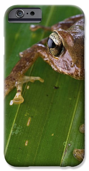 Ground Frog Nakanai Mts Papua New Guinea iPhone Case by Piotr Naskrecki