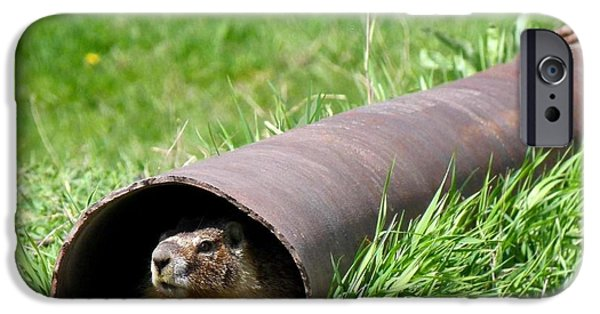 Groundhog iPhone Cases - Groundhog In A Pipe iPhone Case by Will Borden