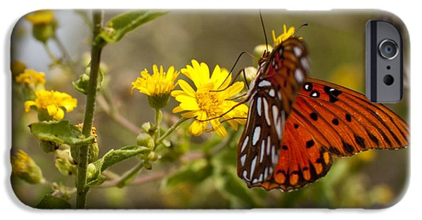 Gulf iPhone Cases - Gulf Fritillary Agraulis vanillae Red Butterfly iPhone Case by Dustin K Ryan