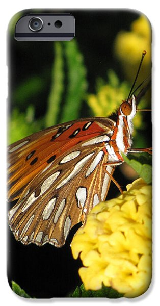 Gulf iPhone Cases - Gulf Fritillary iPhone Case by Amy Tyler
