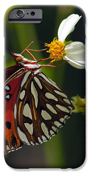 Marble iPhone Cases - Gulf Fritillary iPhone Case by Melanie Viola