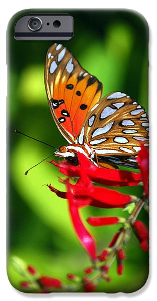 GULF FRITILLARY iPhone Case by Skip Willits