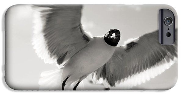 Flying Seagull iPhone Cases - Gull in Flight 2 iPhone Case by Marilyn Hunt