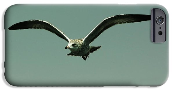 Flying Seagull iPhone Cases - Gull in Flight 2 iPhone Case by Marjorie Imbeau