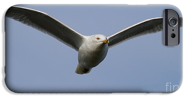Flying Seagull iPhone Cases - Gull In Flight . 7D12082 iPhone Case by Wingsdomain Art and Photography