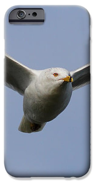 Gull In Flight . 7D12082 iPhone Case by Wingsdomain Art and Photography