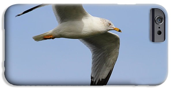 Flying Seagull iPhone Cases - Gull In Flight . 7D12084 iPhone Case by Wingsdomain Art and Photography