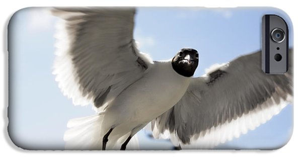 Flying Seagull iPhone Cases - Gull in Flight iPhone Case by Marilyn Hunt
