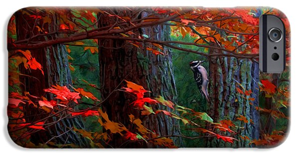 Hairy Woodpecker iPhone Cases - Hairy Woodpecker iPhone Case by Ron Jones