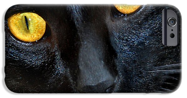 Pictures Of Cats Photographs iPhone Cases - Halloween Cat iPhone Case by Skip Willits