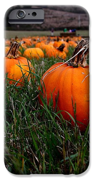 Halloween Pumpkin Patch 7D8405 iPhone Case by Wingsdomain Art and Photography