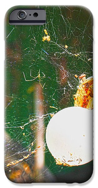 Hanging by a Web iPhone Case by Cheryl Young