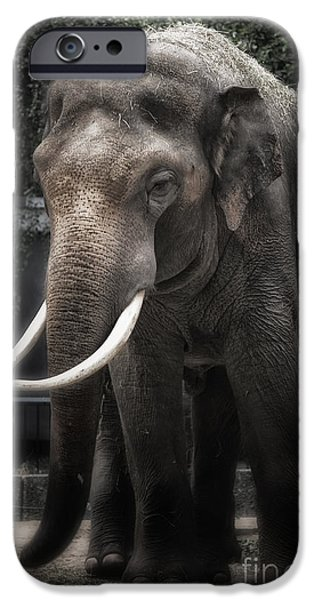 Elephants iPhone Cases - Hanging out iPhone Case by Joan Carroll