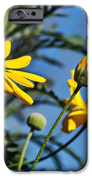 Happy Daisies iPhone Case by Kaye Menner