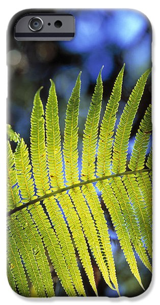 Cibotium iPhone Cases - Hapuu Fern iPhone Case by G. Brad Lewis