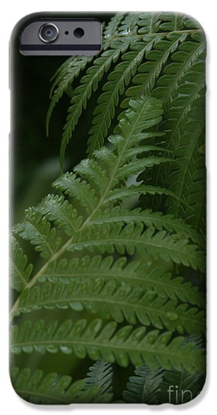 Cibotium iPhone Cases - Hapuu Pulu Hawaiian Tree Fern - Cibotium splendens iPhone Case by Sharon Mau
