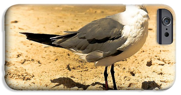 Seagull iPhone Cases - Hartnell iPhone Case by Trish Tritz