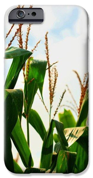 Sweet Corn Farm iPhone Cases - Harvest Corn Stalks iPhone Case by Angela Rath