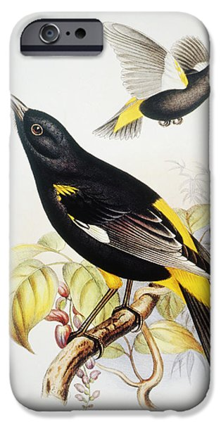Yellow Beak Paintings iPhone Cases - Hawaii Mamo iPhone Case by Hawaiian Legacy Archive - Printscapes