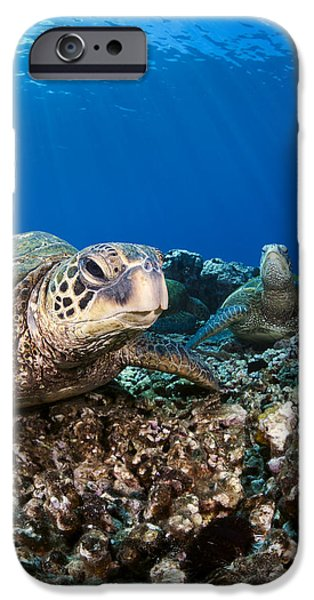 Hawaiian Turtle on Pacific Reef iPhone Case by Dave Fleetham