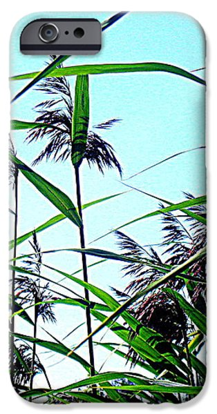 Hay in the summer iPhone Case by Pauli Hyvonen