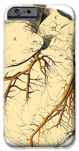 Heart Anatomy, 18th Century iPhone Case by