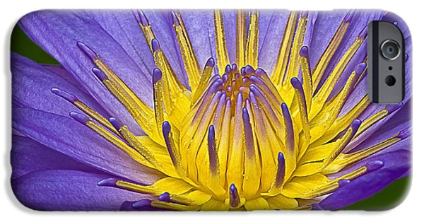 Botany iPhone Cases - Heart Of Gold iPhone Case by Susan Candelario