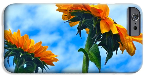 Sunflower Photograph iPhone Cases - Heaven above ... iPhone Case by Gwyn Newcombe