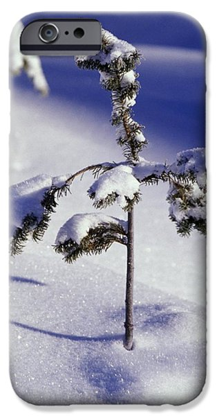 Resilience iPhone Cases - Heavy Snow On Young Pine Tree iPhone Case by Natural Selection Craig Tuttle