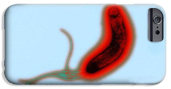Helicobacter Pylori iPhone Cases - Helicobacter Pylori Bacteria, Tem iPhone Case by Dr Klaus Boller