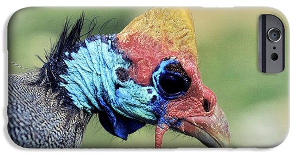 Gamebird iPhone Cases - Helmeted Guineafowl Head iPhone Case by Chris Hellier