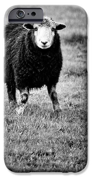 herdwick sheep iPhone Case by Meirion Matthias