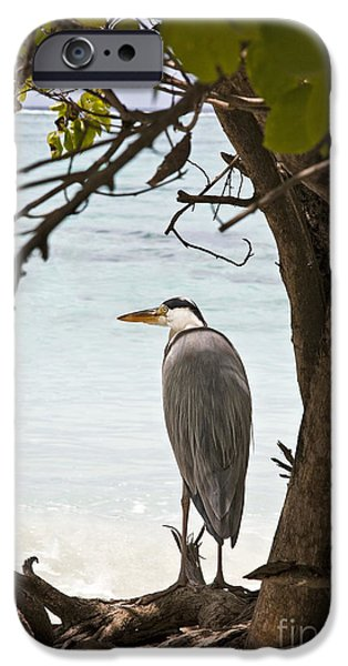 Wetlands iPhone Cases - Heron iPhone Case by Jane Rix