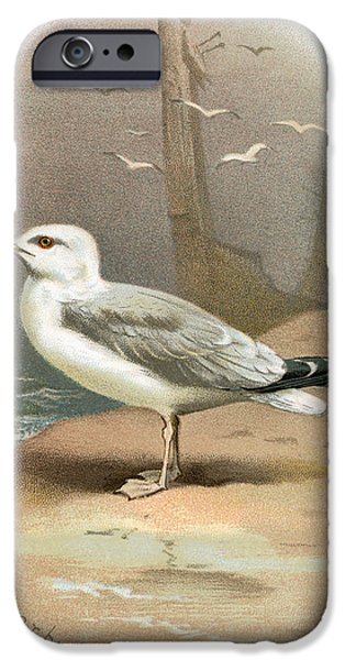 Herring Gull iPhone Cases - Herring Gull, Historical Artwork iPhone Case by Sheila Terry