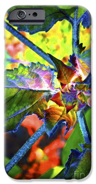 Colorful Sunflower iPhone Cases - Hidden in Color iPhone Case by Gwyn Newcombe