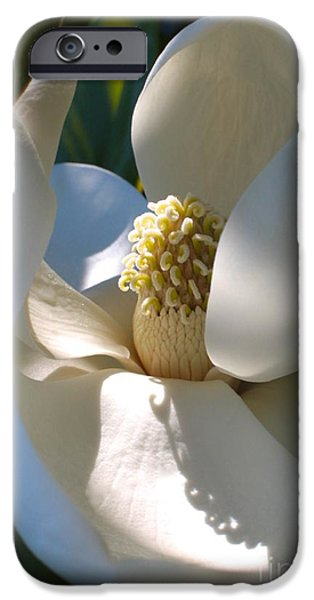 Sunlight On Flowers iPhone Cases - Hidden Magnolia iPhone Case by Carol Groenen