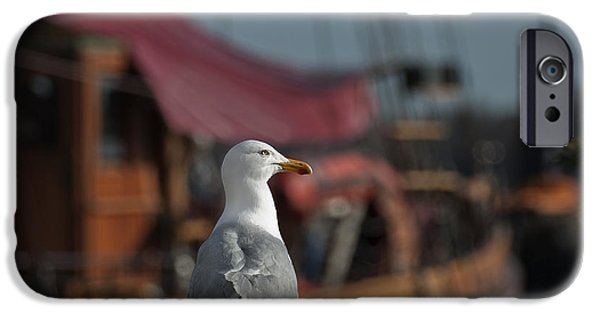 Herring Gull iPhone Cases - Hmm... sooo... East or West today... iPhone Case by Nina Stavlund