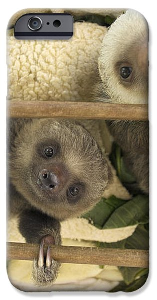 Hoffmanns Two-toed Sloth Orphaned Babies iPhone Case by Suzi Eszterhas