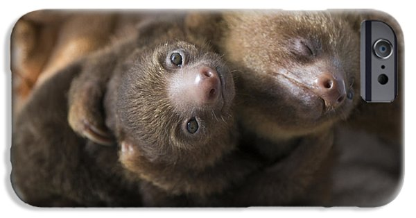 Sloth iPhone Cases - Hoffmanns Two-toed Sloth Orphans Hugging iPhone Case by Suzi Eszterhas