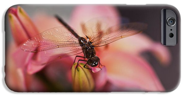 Dragonfly iPhone Cases - Holding On iPhone Case by Mike Reid