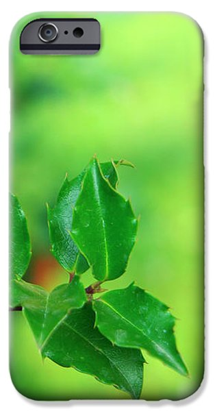 Holly Branch iPhone Case by Carlos Caetano