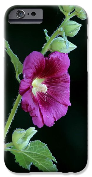 Hollyhock iPhone Cases - Hollyhock iPhone Case by Angie Vogel