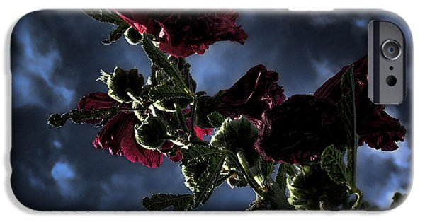 Hollyhock iPhone Cases - Hollyhock iPhone Case by Bonnie Bruno