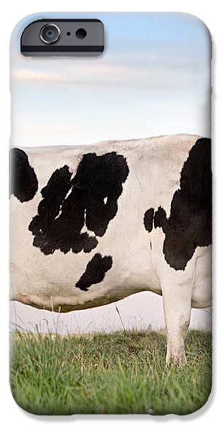 Holstein Dairy Cow iPhone Case by Cindy Singleton