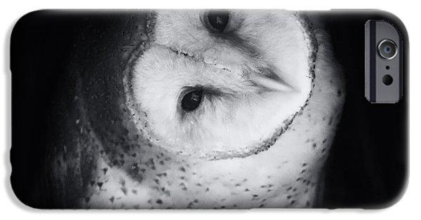 Barn Owl iPhone Cases - Hoo Are You Barn Owl Photo iPhone Case by Stephanie McDowell