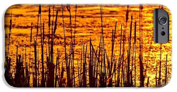 Willow Lake iPhone Cases - Horicon Cattail Marsh Wisconsin iPhone Case by Steve Gadomski